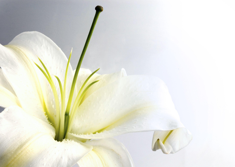 Flowers language globalinfo4all orchid izmirmasajfo