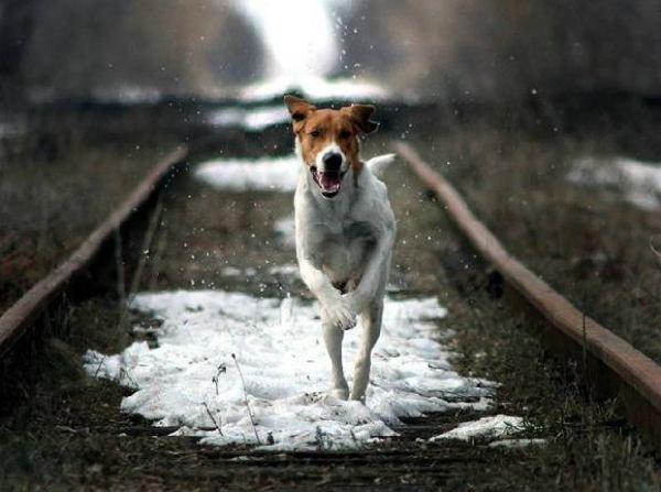 Inspiring Dog